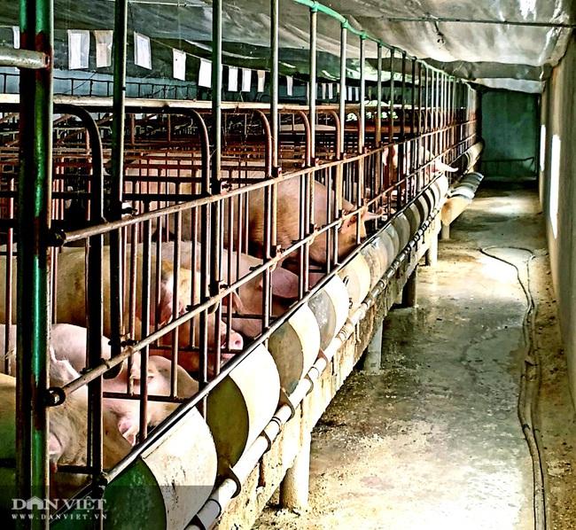 Thận trọng trong tái đàn lợn, nhiều nông dân xứ Lạng thắng lớn - Ảnh 2.