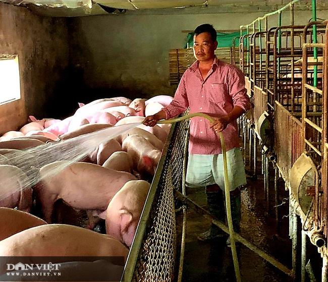 Thận trọng trong tái đàn lợn, nhiều nông dân xứ Lạng thắng lớn - Ảnh 1.