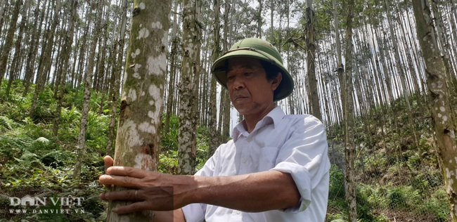 """Người """"nghệ sỹ"""" sáng tác cây giống, giúp dân thoát nghèo - Ảnh 2."""