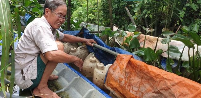 Lão nông miền Tây tiếc nuối vì hàng trăm ký lươn đồng nuôi trong can nhựa bị thiệt hại do thuốc diệt ốc - Ảnh 1.