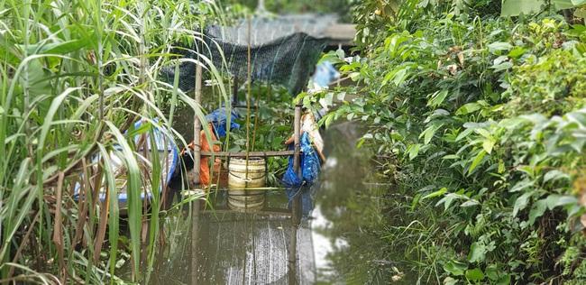 Lão nông miền Tây tiếc nuối vì hàng trăm ký lươn đồng nuôi trong can nhựa bị thiệt hại do thuốc diệt ốc - Ảnh 2.