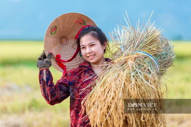 Chùm ảnh: Mùa gặt trên cánh đồng xứ Nghệ - Ảnh 3.