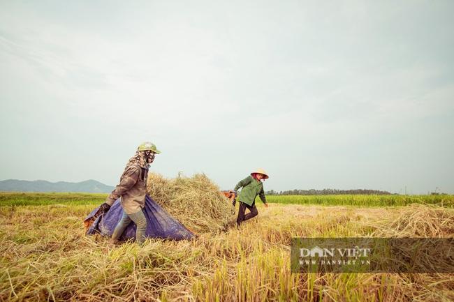 Chùm ảnh: Mùa gặt trên cánh đồng xứ Nghệ - Ảnh 6.
