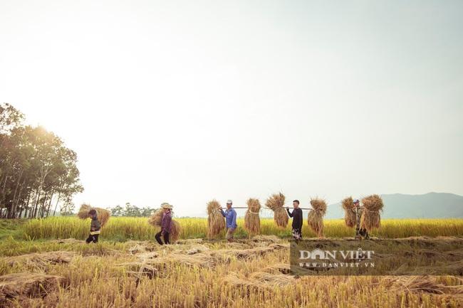 Chùm ảnh: Mùa gặt trên cánh đồng xứ Nghệ - Ảnh 5.