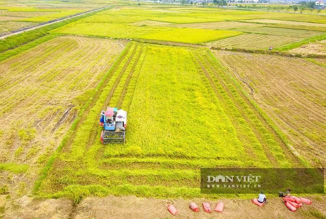 Chùm ảnh: Mùa gặt trên cánh đồng xứ Nghệ - Ảnh 1.