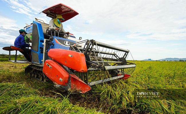 Chùm ảnh: Mùa gặt trên cánh đồng xứ Nghệ - Ảnh 2.
