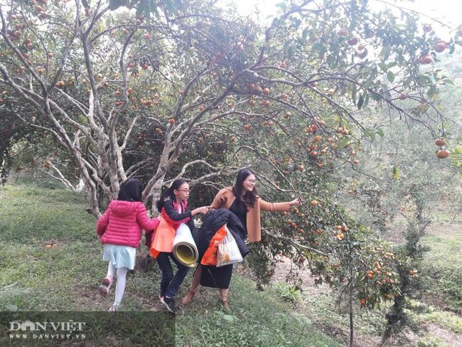 Quảng Ninh: Khi nông nghiệp bổ trợ cho du lịch - Ảnh 5.