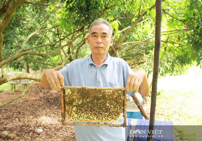 """Lão nông Nghệ An nuôi loài chăm chỉ """"nhả"""" mật ngọt, kiếm bộn tiền mỗi năm - Ảnh 1."""
