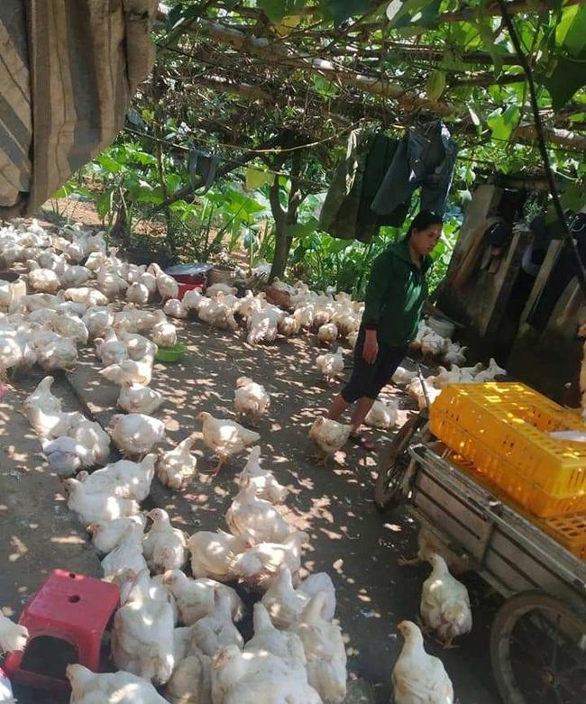 Giá gia cầm hôm nay 14/9: Giá gà thịt công nghiệp tiếp tục giảm, vịt thịt tiêu thụ thuận lợi - Ảnh 1.