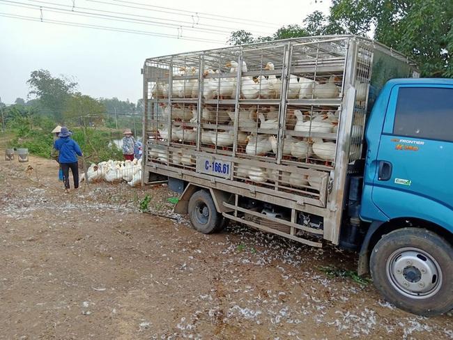 Giá gia cầm hôm nay 14/9: Giá gà thịt công nghiệp tiếp tục giảm, vịt thịt tiêu thụ thuận lợi - Ảnh 2.