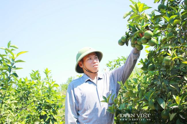 Nghệ An: Ấm no, giàu có nhờ trồng cây ra trái từng chùm treo lủng lẳng trên cành - Ảnh 1.
