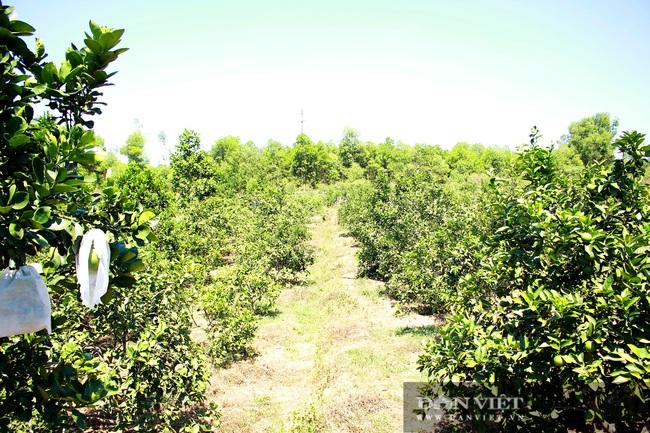 Nghệ An: Ấm no, giàu có nhờ trồng cây ra trái từng chùm treo lủng lẳng trên cành - Ảnh 4.