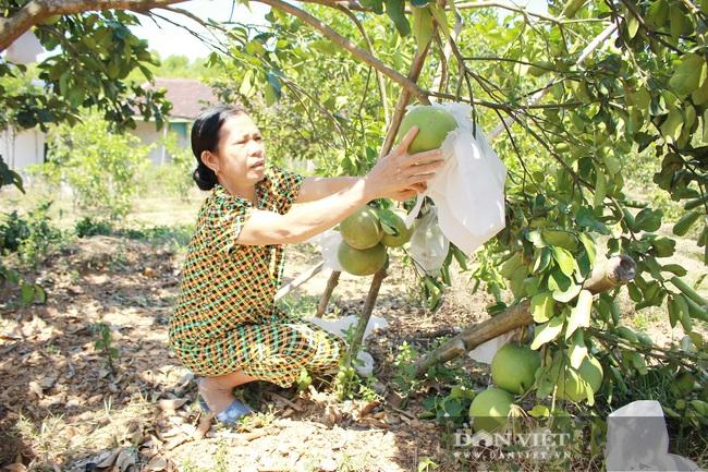 Nghệ An: Ấm no, giàu có nhờ trồng cây ra trái từng chùm treo lủng lẳng trên cành - Ảnh 3.