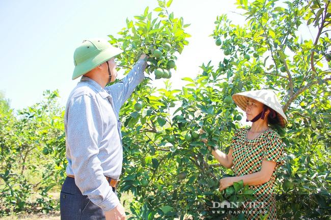Nghệ An: Ấm no, giàu có nhờ trồng cây ra trái từng chùm treo lủng lẳng trên cành - Ảnh 5.