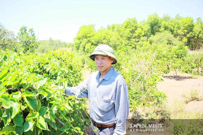Nghệ An: Ấm no, giàu có nhờ trồng cây ra trái từng chùm treo lủng lẳng trên cành - Ảnh 6.