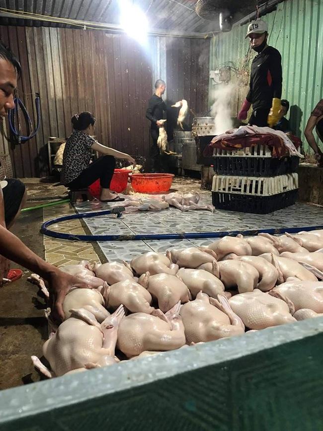 Giá gia cầm hôm nay 16/9: Lò miền Nam đổ xô mua vịt thịt, gà lông trắng đứng giá - Ảnh 1.