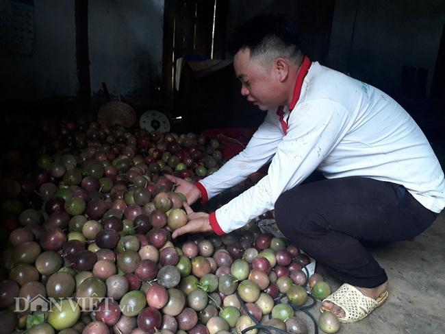 9X Lai Châu trồng chanh leo quả sai lúc lỉu nhờ bí quyết này - Ảnh 3.