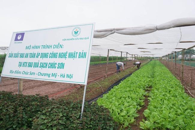 Chúc Sơn thành công với chuỗi sản xuất rau sạch - Ảnh 4.