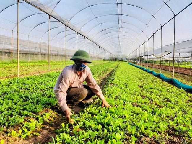 Chúc Sơn thành công với chuỗi sản xuất rau sạch - Ảnh 1.