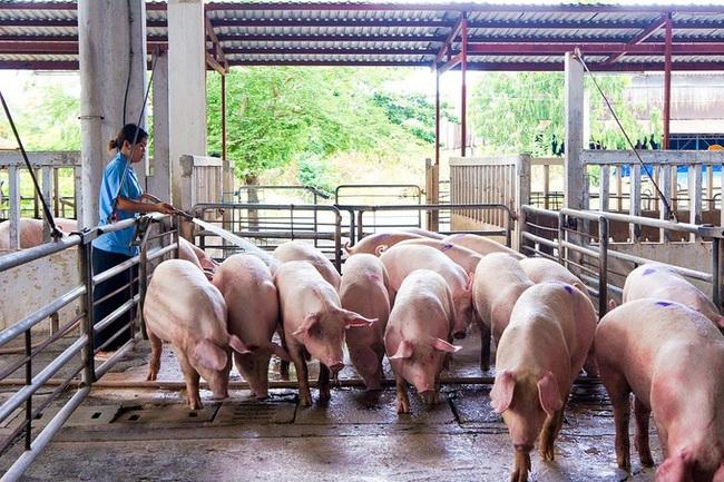 """Xây dựng cuộc """"cách mạng"""" ngành chăn nuôi lần 2  - Ảnh 3."""
