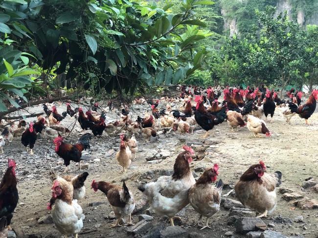 Giá gia cầm hôm nay 18/9: Lượng trứng gia cầm tăng vù vù, trứng gà trứng vịt theo nhau rớt giá - Ảnh 2.