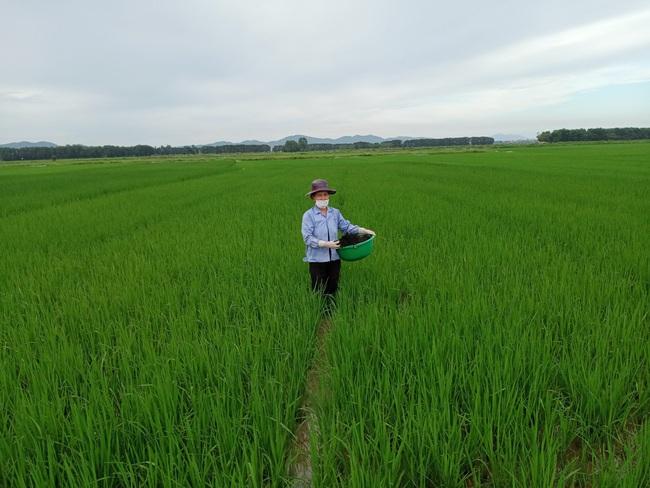 """Bắc Ninh: Biến rác bếp, rác chợ thành phân hữu cơ, tưới đường hoa, ruộng lúa, rau xanh mướt, ăn """"ngon, giòn và an toàn"""" - Ảnh 2."""