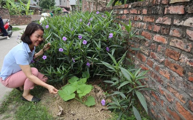 """Bắc Ninh: Biến rác bếp, rác chợ thành phân hữu cơ, tưới đường hoa, ruộng lúa, rau xanh mướt, ăn """"ngon, giòn và an toàn"""" - Ảnh 3."""