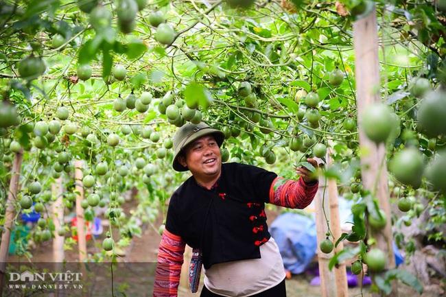Vựa hoa quả Sơn La sẵn sàng cung ứng hàng cho nhà máy chế biến - Ảnh 5.