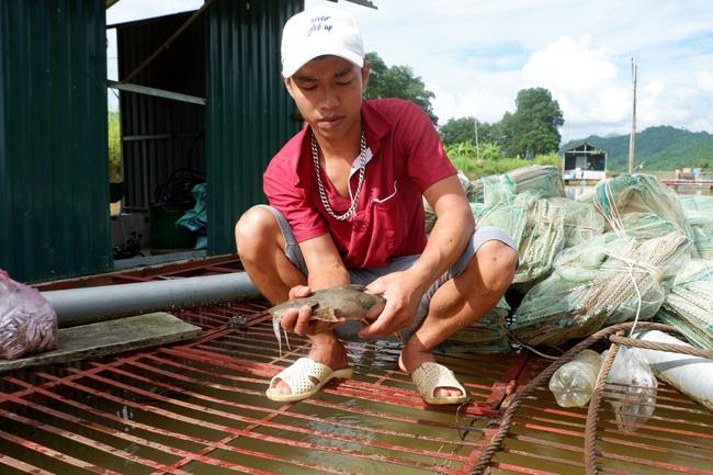 Được giúp vốn và kỹ thuật, yên tâm nuôi cá đặc sản - Ảnh 1.