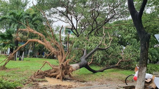 Đà Nẵng: Đường ngập, cây gãy cành đè nhà người dân do ảnh hưởng bão số 5 - Ảnh 5.