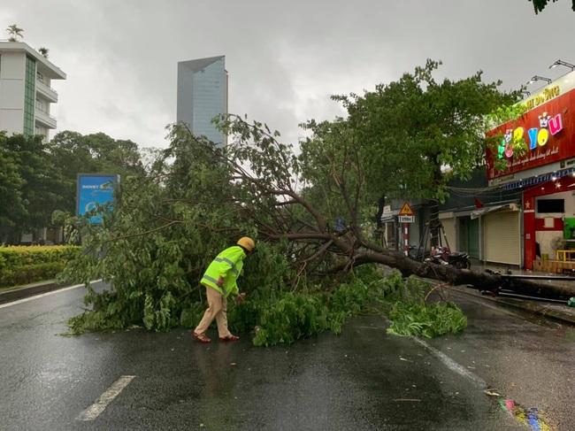 TT-Huế: Hàng chục nhà dân tốc mái, nhiều cây xanh gãy đổ do gió giật mạnh  - Ảnh 1.