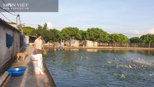 """Nam Định: Nuôi đủ các loại cá, """"ẵm"""" hơn nửa tỷ đồng chỉ sau 300 ngày - Ảnh 5."""