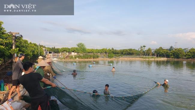 """Nam Định: Nuôi đủ các loại cá, """"ẵm"""" hơn nửa tỷ đồng chỉ sau 300 ngày - Ảnh 4."""