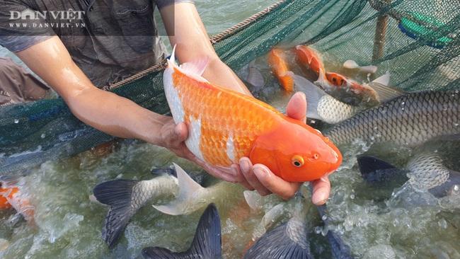 """Nam Định: Nuôi đủ các loại cá, """"ẵm"""" hơn nửa tỷ đồng chỉ sau 300 ngày - Ảnh 6."""
