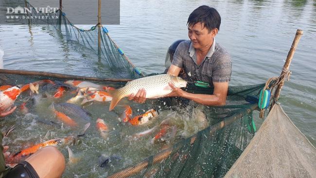 """Nam Định: Nuôi đủ các loại cá, """"ẵm"""" hơn nửa tỷ đồng chỉ sau 300 ngày - Ảnh 3."""