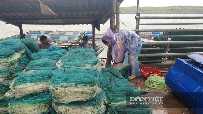 Hà Tĩnh: Ngư dân nuôi cá lồng bè khẩn trương ứng phó với bão số 5 - Ảnh 4.