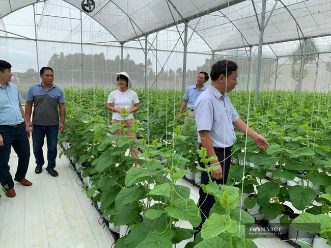 Nông nghiệp công nghệ cao nở rộ, Sóc Sơn cán đích huyện NTM nay nay - Ảnh 4.