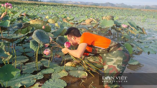 Nghệ An: Chàng kỹ sư Công nghệ thông tin trồng sen Tây Hồ trái mùa tính hoa thu tiền - Ảnh 6.