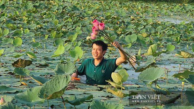 Nghệ An: Chàng kỹ sư Công nghệ thông tin trồng sen Tây Hồ trái mùa tính hoa thu tiền - Ảnh 3.