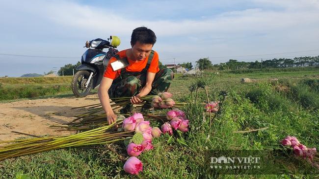 Nghệ An: Chàng kỹ sư Công nghệ thông tin trồng sen Tây Hồ trái mùa tính hoa thu tiền - Ảnh 4.