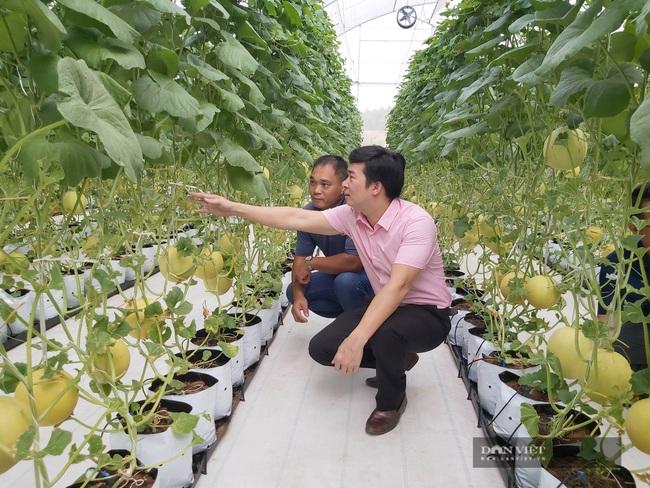 Nông nghiệp công nghệ cao nở rộ, Sóc Sơn cán đích huyện NTM nay nay - Ảnh 1.