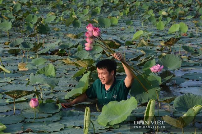 Nghệ An: Chàng kỹ sư Công nghệ thông tin trồng sen Tây Hồ trái mùa tính hoa thu tiền - Ảnh 2.