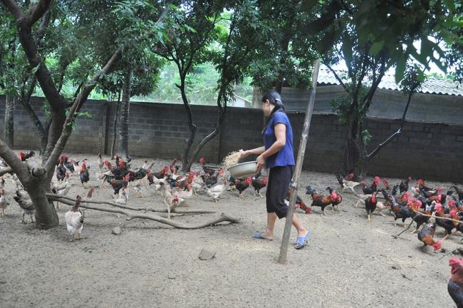 Giá gia cầm hôm nay 2/9: Giá gà thịt bắt đầu chững lại, nhiều nơi người nuôi vẫn phải bán giá thấp - Ảnh 1.