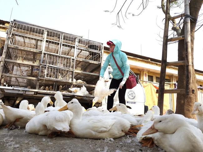 Giá gia cầm hôm nay 2/9: Giá gà thịt bắt đầu chững lại, nhiều nơi người nuôi vẫn phải bán giá thấp - Ảnh 2.