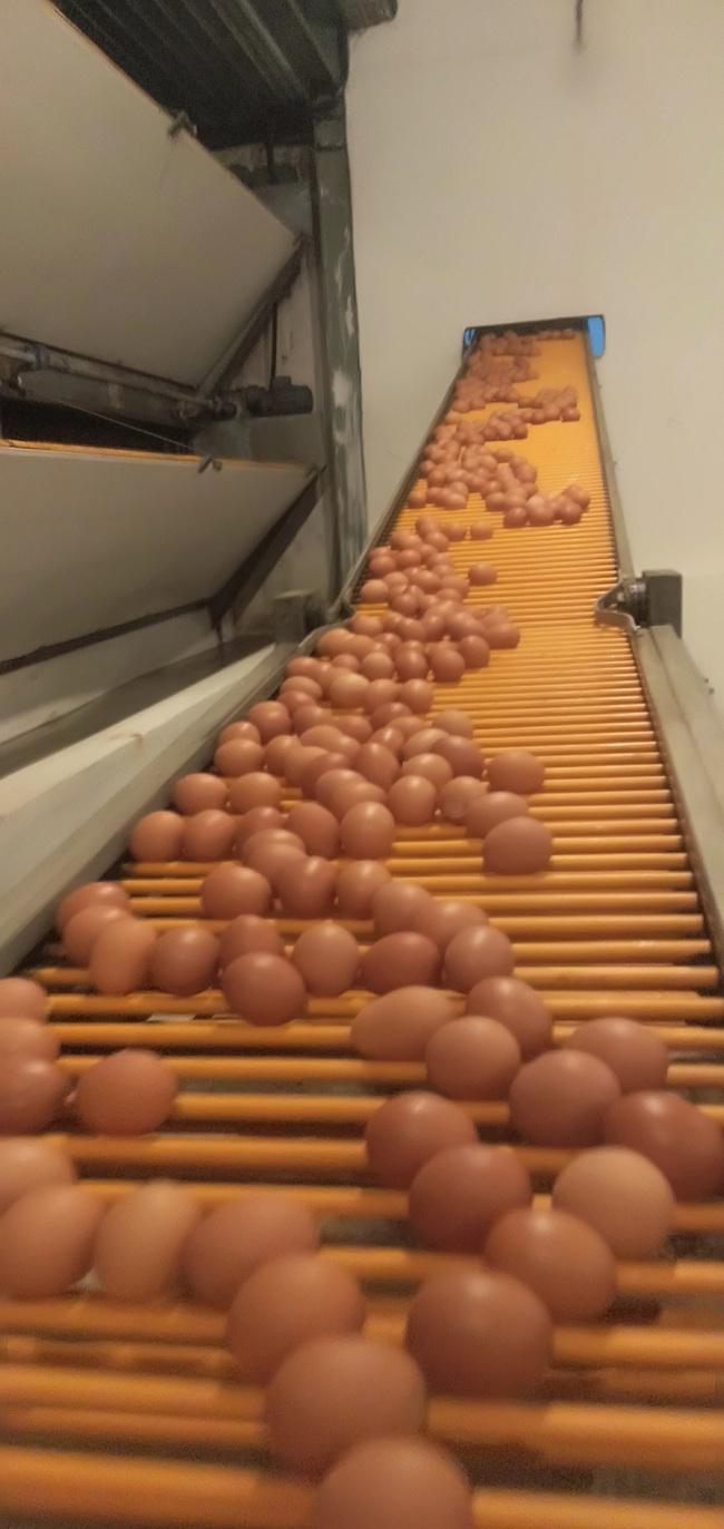 Có gì ở trang trại gà lấy trứng DHA Omega3 khiến Chủ tịch Hội Nông dân Việt Nam khen tắm tắc? - Ảnh 2.