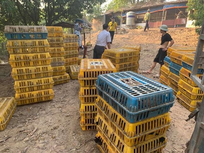 Giá gia cầm hôm nay 22/9: Nguồn cung gà vịt tăng cao, chuyên gia cảnh báo khẩn cấp đến người nuôi - Ảnh 2.