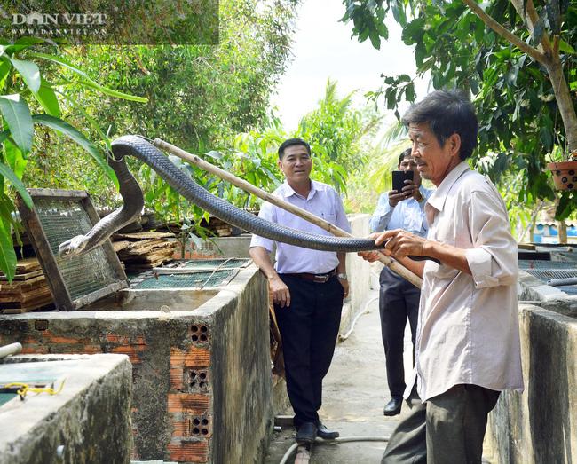 Kiên Giang có 55.000 hộ nông dân sản xuất kinh doanh giỏi mỗi năm - Ảnh 2.