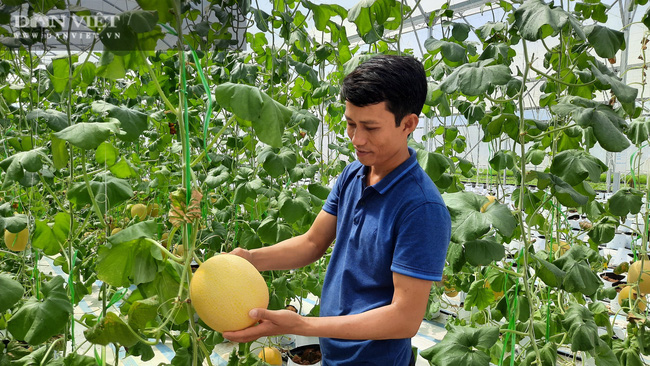 """""""Làn sóng"""" làm nông nghiệp công nghệ cao ở Quảng Ninh  - Ảnh 2."""