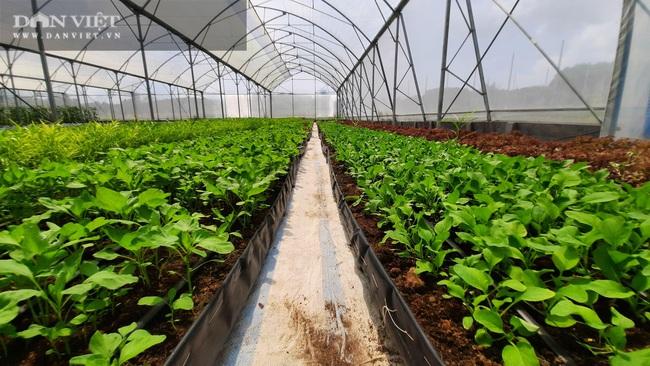 """""""Làn sóng"""" làm nông nghiệp công nghệ cao ở Quảng Ninh  - Ảnh 3."""