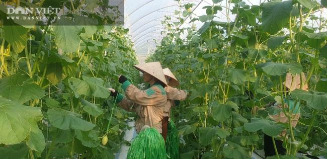 """""""Làn sóng"""" làm nông nghiệp công nghệ cao ở Quảng Ninh  - Ảnh 5."""